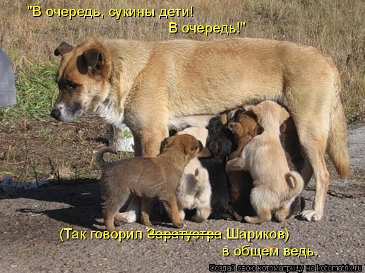 """Котоматрица: """"В очередь, сукины дети! В очередь!"""" (Так говорил Заратустра Шариков) в общем ведь. _________"""