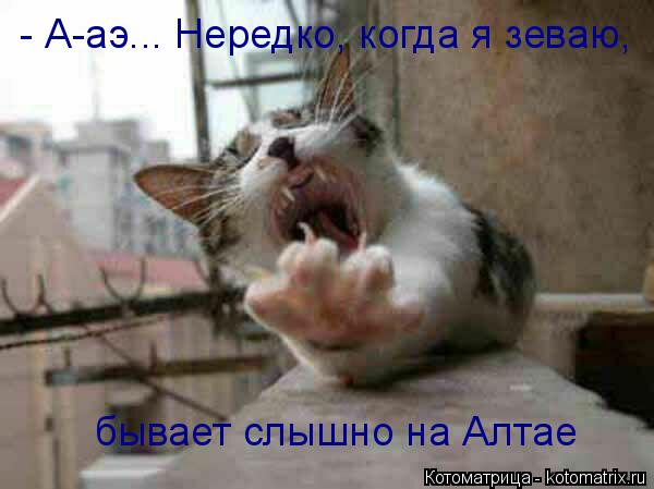 Котоматрица: бывает слышно на Алтае - А-аэ... Нередко, когда я зеваю,