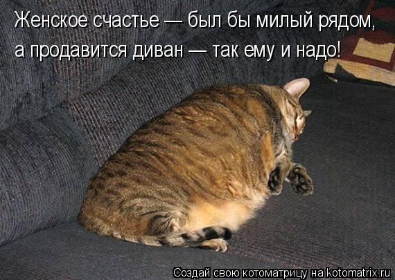 Котоматрица: Женское счастье — был бы милый рядом, а продавится диван — так ему и надо!