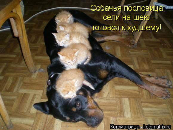 Котоматрица: Собачья пословица:  сели на шею -  готовся к худшему!
