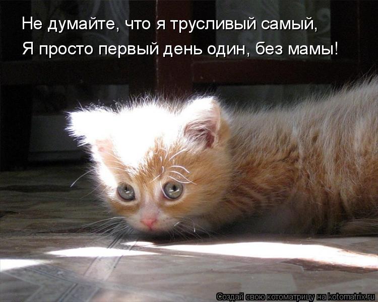 Котоматрица: Не думайте, что я трусливый самый, Я просто первый день один, без мамы!