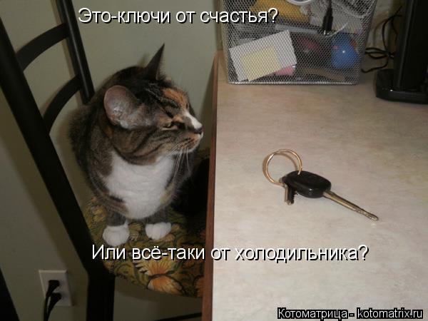 Котоматрица: Это-ключи от счастья? Или всё-таки от холодильника?
