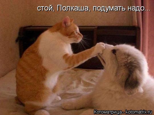 Котоматрица: стой, Полкаша, подумать надо...