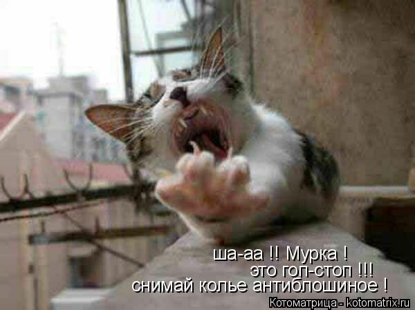 Котоматрица: ша-аа !! Мурка ! это гоп-стоп !!! снимай колье антиблошиное !