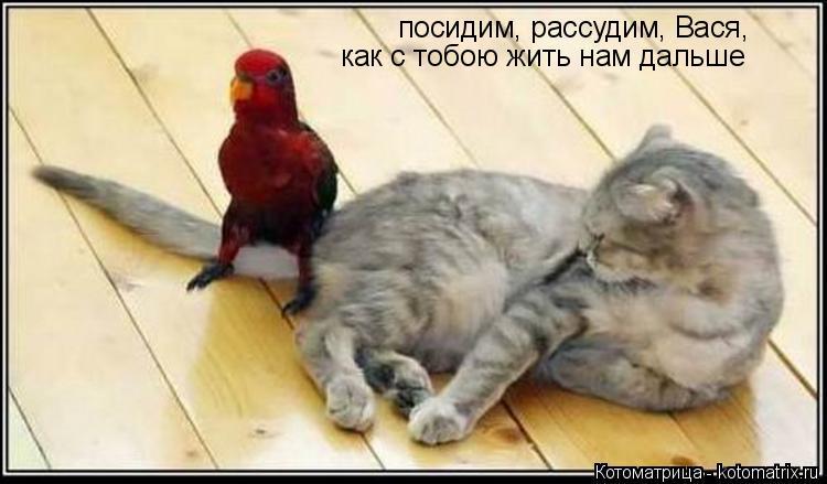 Котоматрица: посидим, рассудим, Вася, как с тобою жить нам дальше