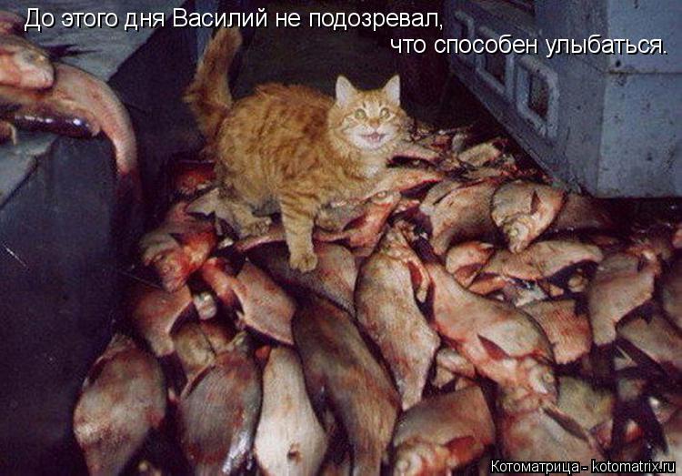 Котоматрица: До этого дня Василий не подозревал,  что способен улыбаться.