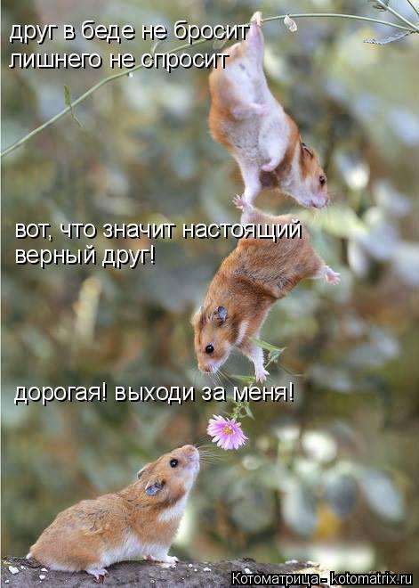 Котоматрица: друг в беде не бросит лишнего не спросит вот, что значит настоящий верный друг! дорогая! выходи за меня!