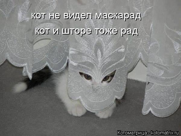 Котоматрица: кот не видел маскарад кот и шторе тоже рад