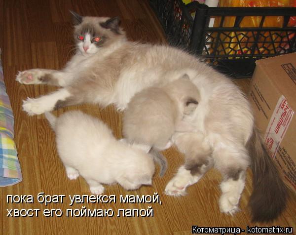 Котоматрица: пока брат увлекся мамой, хвост его поймаю лапой