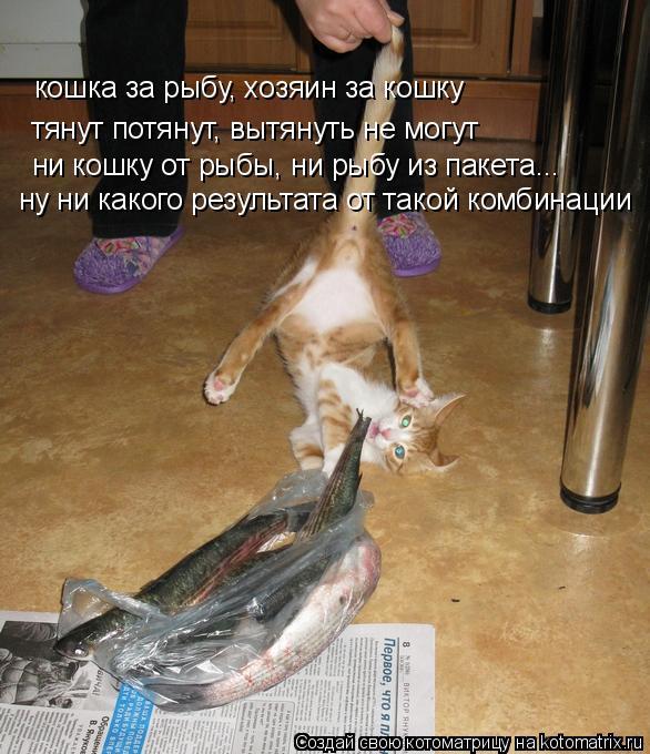Котоматрица: тянут потянут, вытянуть не могут кошка за рыбу, хозяин за кошку ни кошку от рыбы, ни рыбу из пакета... ну ни какого результата от такой комбина