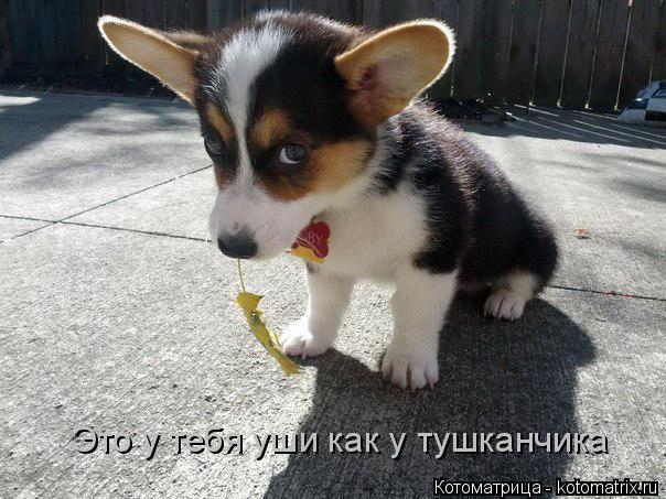 Котоматрица: Это у тебя уши как у тушканчика