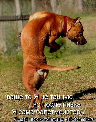 Котоматрица: ваще то Я не танцую.... но после пивка  Я сама балетмейстер....