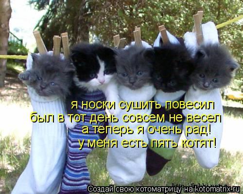 Котоматрица: я носки сушить повесил был в тот день совсем не весел а теперь я очень рад! у меня есть пять котят!
