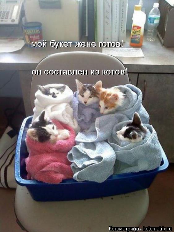 Котоматрица: мой букет жене готов! он составлен из котов!