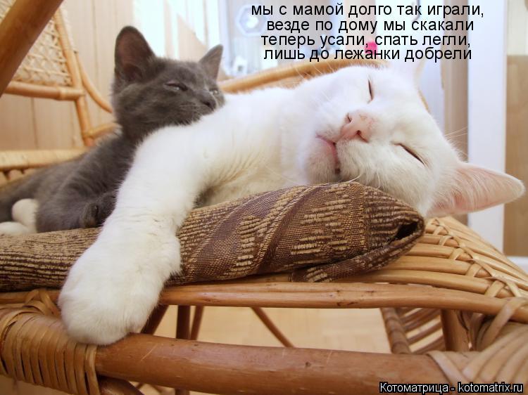 Котоматрица: мы с мамой долго так играли, везде по дому мы скакали теперь усали, спать легли, лишь до лежанки добрели