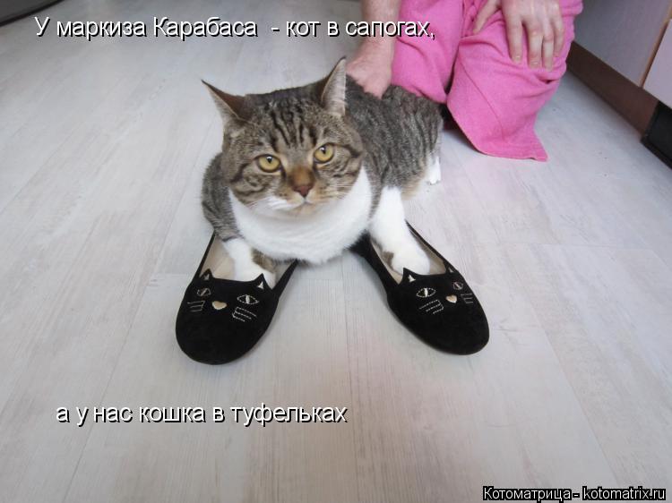 Котоматрица: У маркиза Карабаса  - кот в сапогах,  а у нас кошка в туфельках