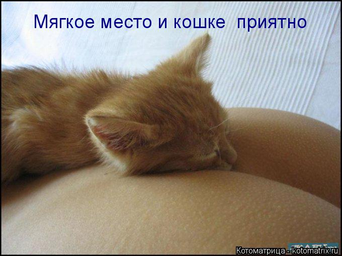 Котоматрица: Мягкое место и кошке  приятно