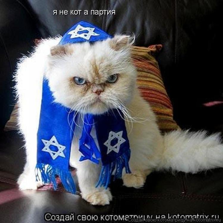 Котоматрица: я не кот а партия
