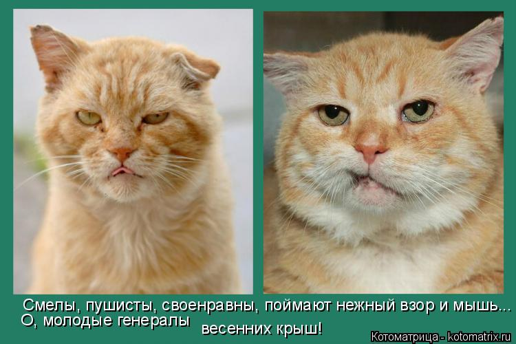 http://kotomatrix.ru/images/lolz/2014/06/11/kotomatritsa_en.jpg