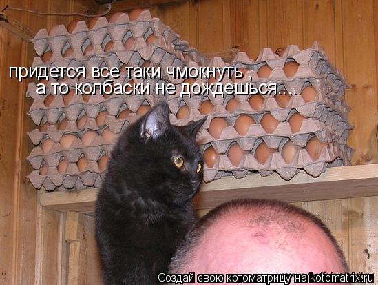 Котоматрица: придется все таки чмокнуть , а то колбаски не дождешься....