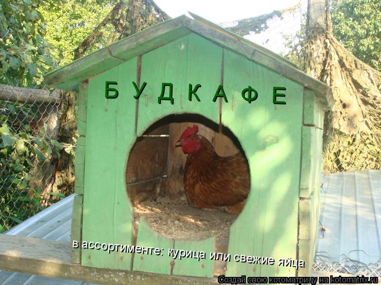Котоматрица: Б  У  Д  К  А  Ф  Е в ассортименте: курица или свежие яйца