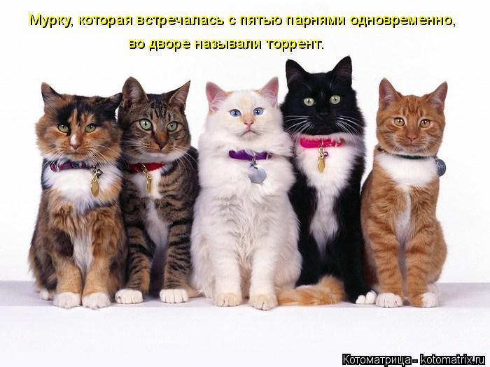 http://kotomatrix.ru/images/lolz/2014/06/13/kotomatritsa_8A.jpg
