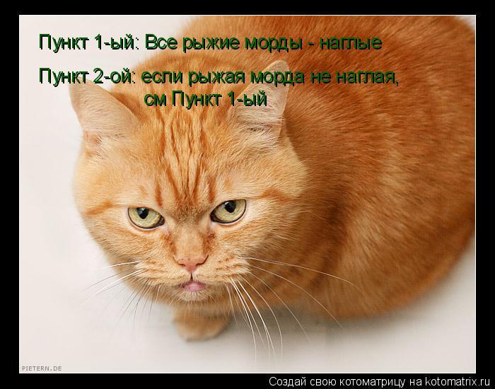 Наглая кошачья морда фото 546-212