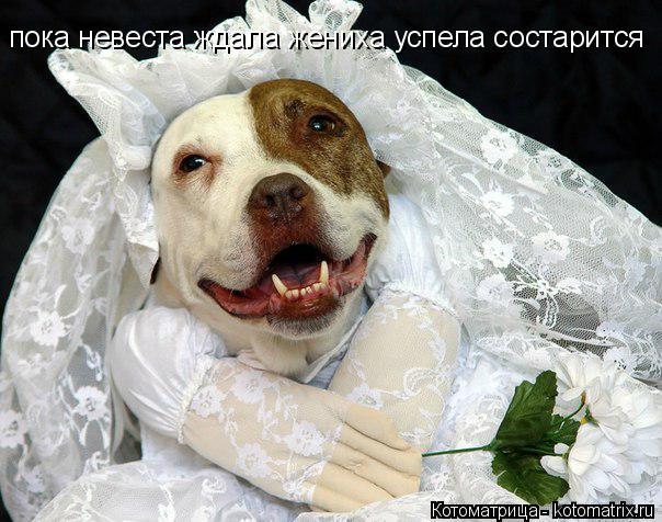 Котоматрица: пока невеста ждала жениха успела состарится