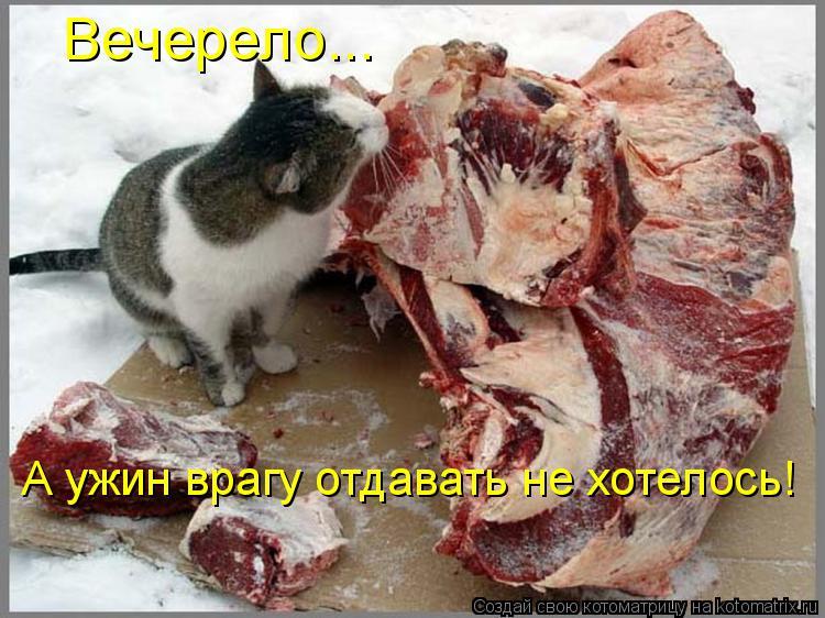 Котоматрица: Вечерело... А ужин врагу отдавать не хотелось!