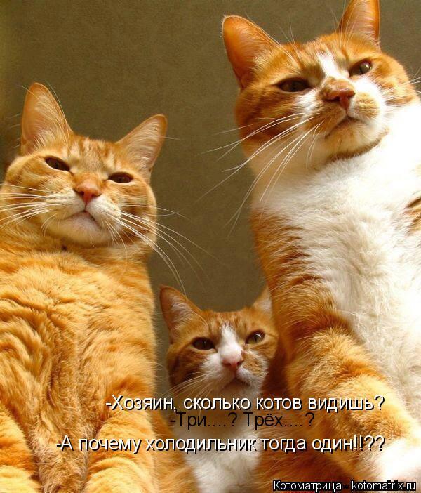 Котоматрица: -Хозяин, сколько котов видишь? -Три....? Трёх....? -А почему холодильник тогда один!!??