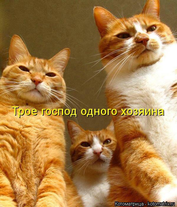 Котоматрица: Трое господ одного хозяина