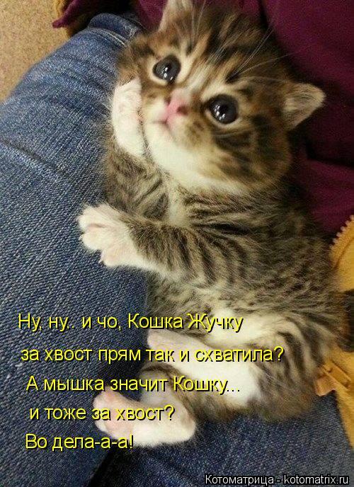 Котоматрица: Ну, ну.. и чо, Кошка Жучку за хвост прям так и схватила? А мышка значит Кошку...  и тоже за хвост? Во дела-а-а!