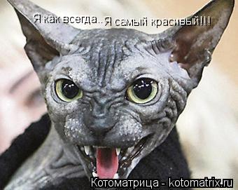 Котоматрица: Я как всегда... Я самый красивый!!!