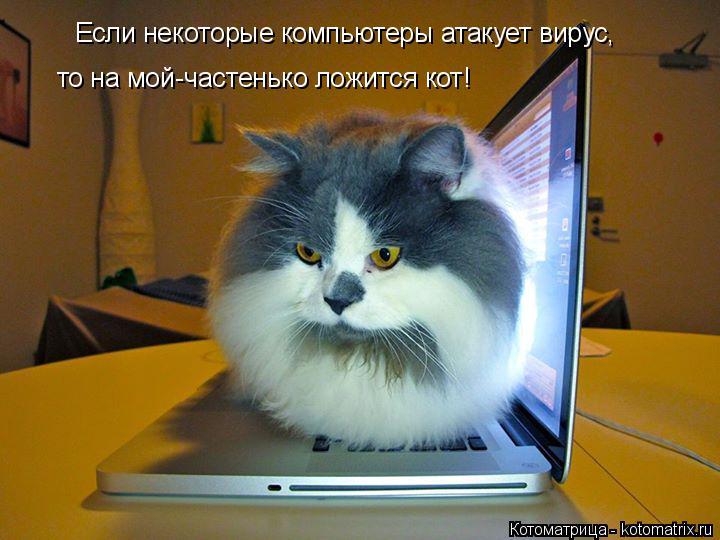 Котоматрица: Если некоторые компьютеры атакует вирус, то на мой-частенько ложится кот!