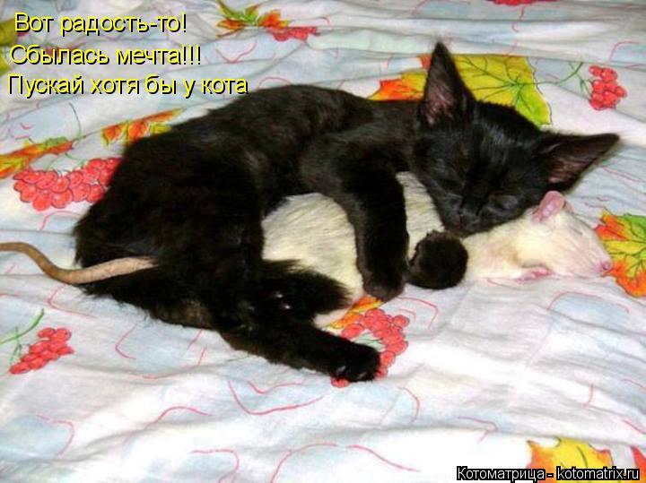 Котоматрица: Вот радость-то!  Сбылась мечта!!!   Пускай хотя бы у кота
