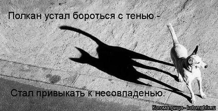 Котоматрица: Полкан устал бороться с тенью - Стал привыкать к несовпаденью.