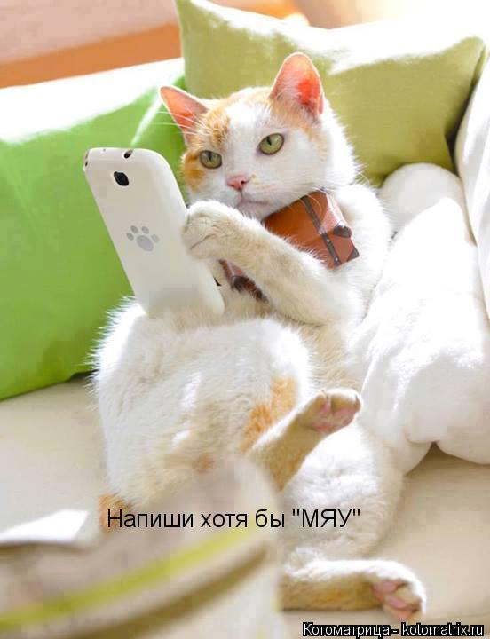 """Котоматрица: Напиши хотя бы """"МЯУ"""""""