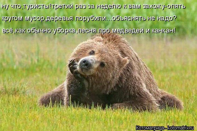 Котоматрица: ну что,туристы!третий раз за неделю к вам захожу-опять кругом мусор,деревья порубили...объяснять не надо? всё,как обычно:уборка,песня про мед