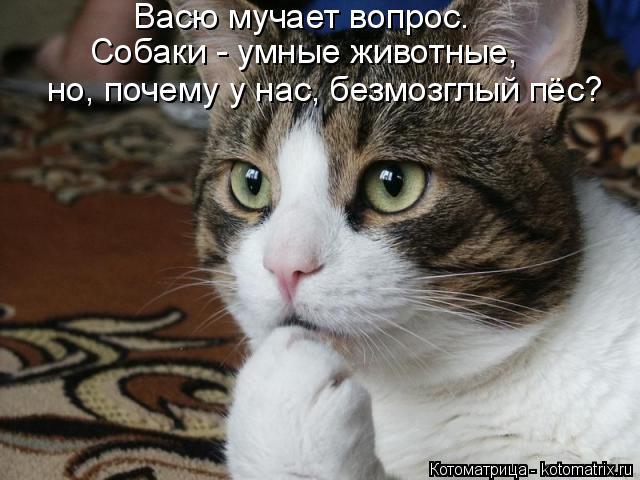 Котоматрица: Васю мучает вопрос. Собаки - умные животные, но, почему у нас, безмозглый пёс?
