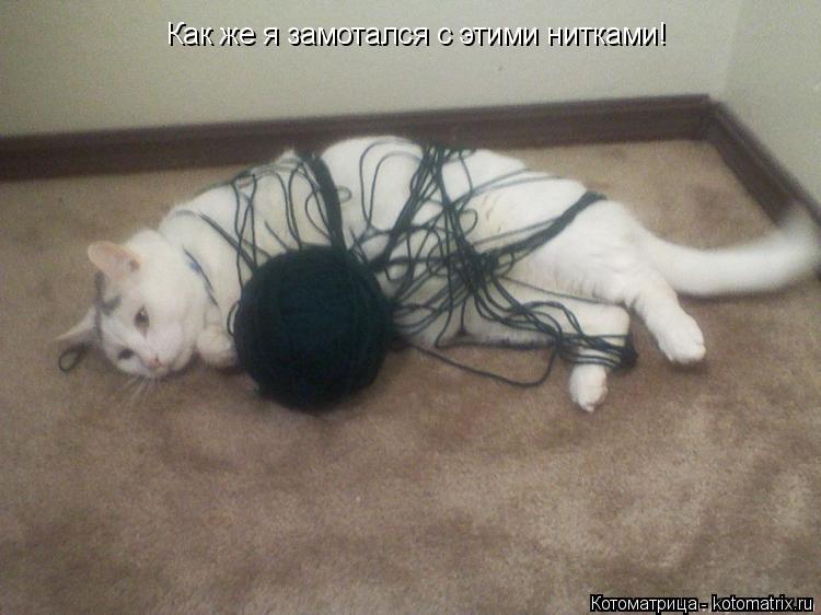 Котоматрица: Как же я замотался с этими нитками!