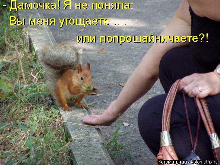 http://kotomatrix.ru/images/lolz/2014/06/16/kotomatritsa_rz.jpg