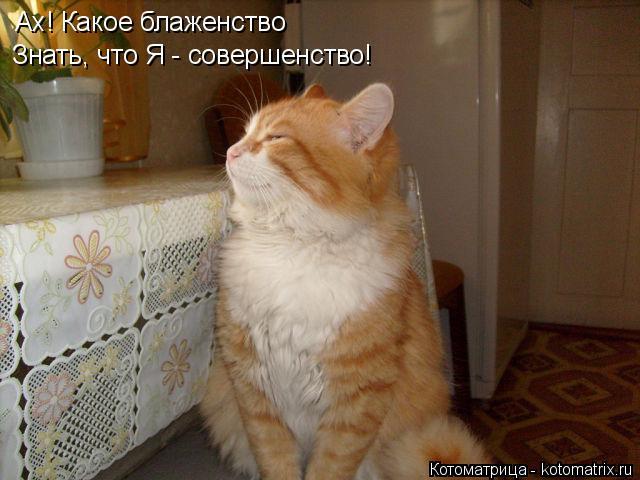 http://kotomatrix.ru/images/lolz/2014/06/16/kotomatritsa_wN.jpg