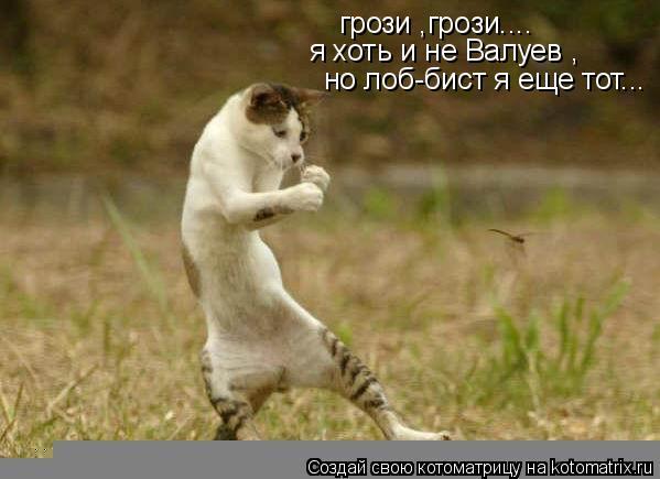 Котоматрица: грози ,грози.... я хоть и не Валуев , но лоб-бист я еще тот...