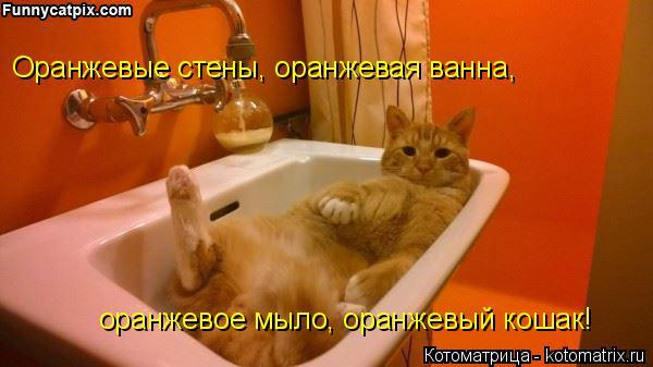 Котоматрица: Оранжевые стены, оранжевая ванна, оранжевое мыло, оранжевый кошак!