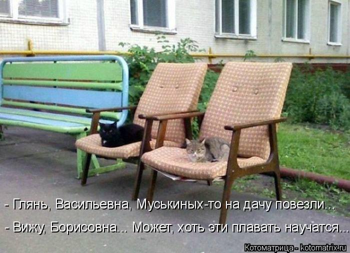 Котоматрица: - Глянь, Васильевна, Муськиных-то на дачу повезли... - Вижу, Борисовна... Может, хоть эти плавать научатся...