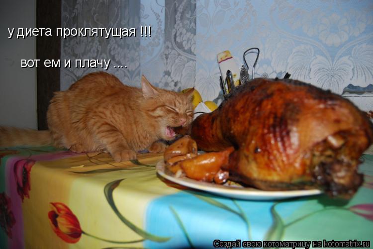 Котоматрица: у диета проклятущая !!! вот ем и плачу ....