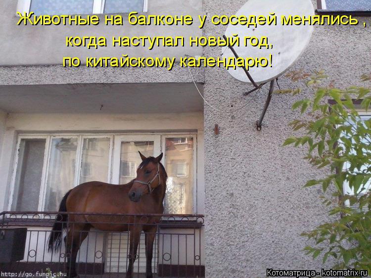 Котоматрица: Животные на балконе у соседей менялись , когда наступал новый год, по китайскому календарю!