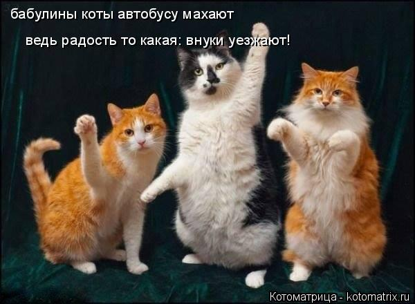 Котоматрица: бабулины коты автобусу махают ведь радость то какая: внуки уезжают!
