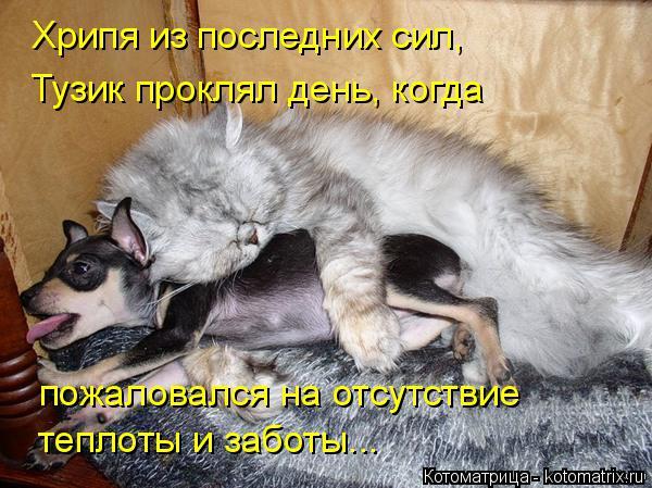 Котоматрица: Хрипя из последних сил,  Тузик проклял день, когда  пожаловался на отсутствие  теплоты и заботы...