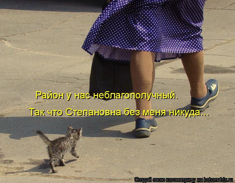 Котоматрица: Так что Степановна без меня никуда... Район у нас неблагополучный.
